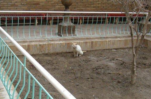Szuka domu bezdomny kot..., Sówka55