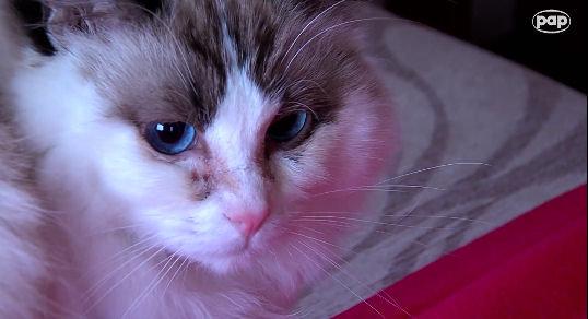 Behawiorysta radzi, jak żyć z kotem pod jednym dachem